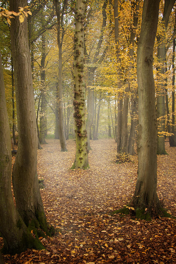 English Forest In Autumn Photograph  - English Forest In Autumn Fine Art Print