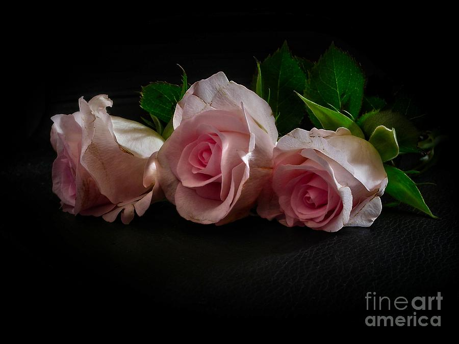 English Roses Photograph  - English Roses Fine Art Print