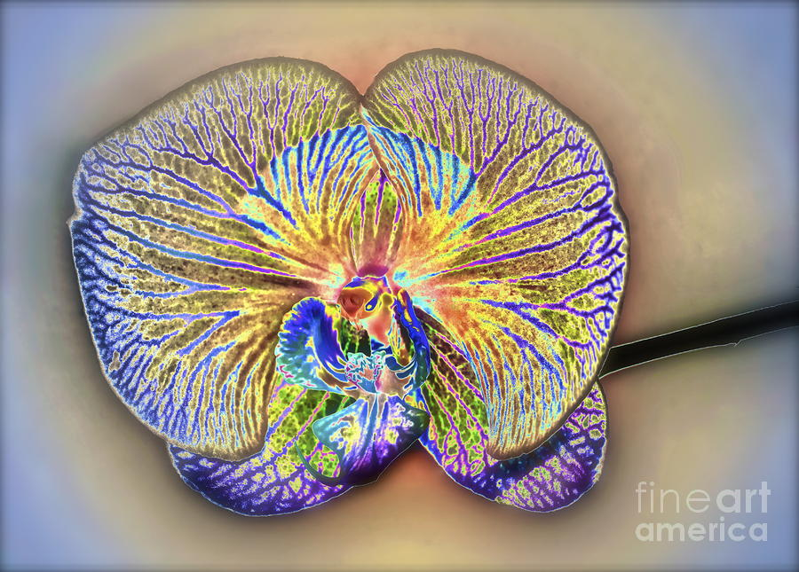 Enlightened Orchid Photograph  - Enlightened Orchid Fine Art Print