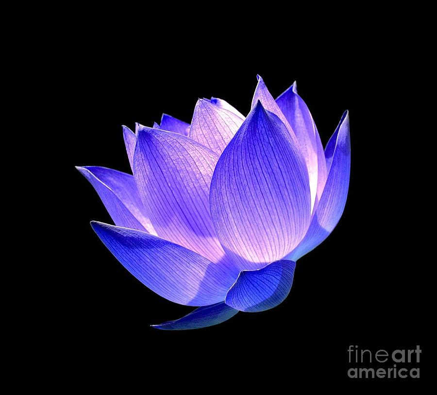 Enlightened Photograph  - Enlightened Fine Art Print
