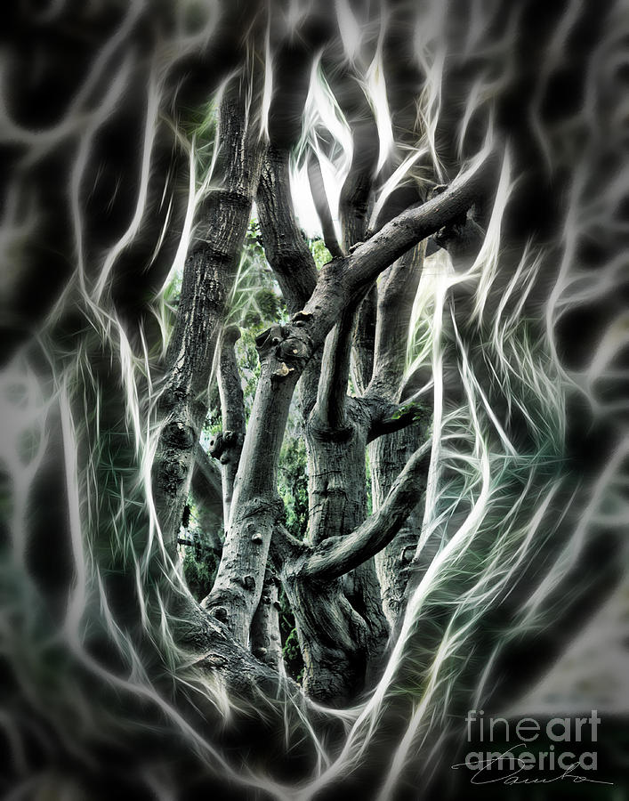 Entangled Worlds Photograph