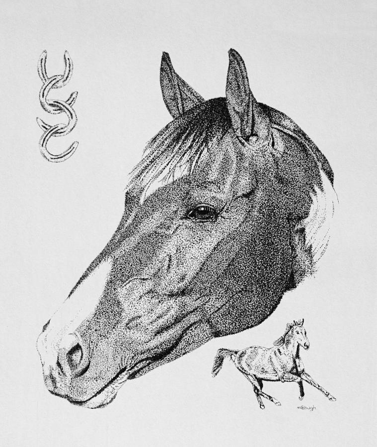 Equine Profile Drawing  - Equine Profile Fine Art Print