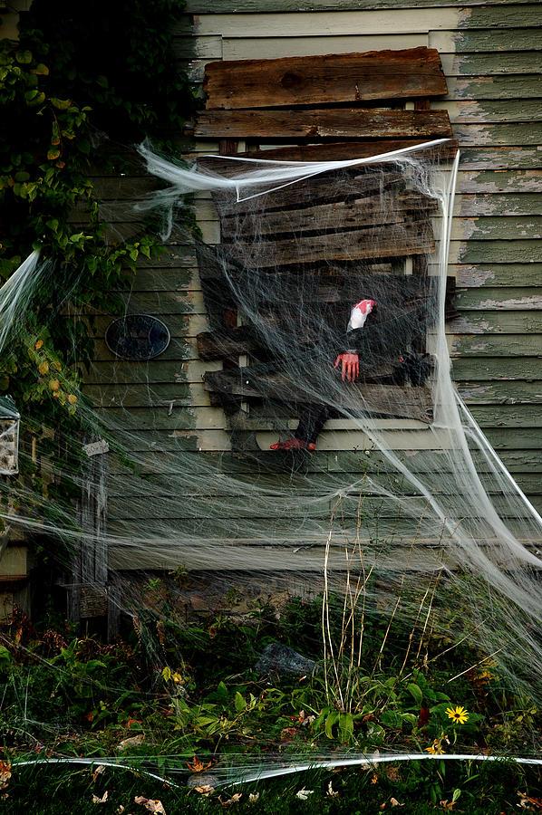 Usa Photograph - Escaping The Web by LeeAnn McLaneGoetz McLaneGoetzStudioLLCcom