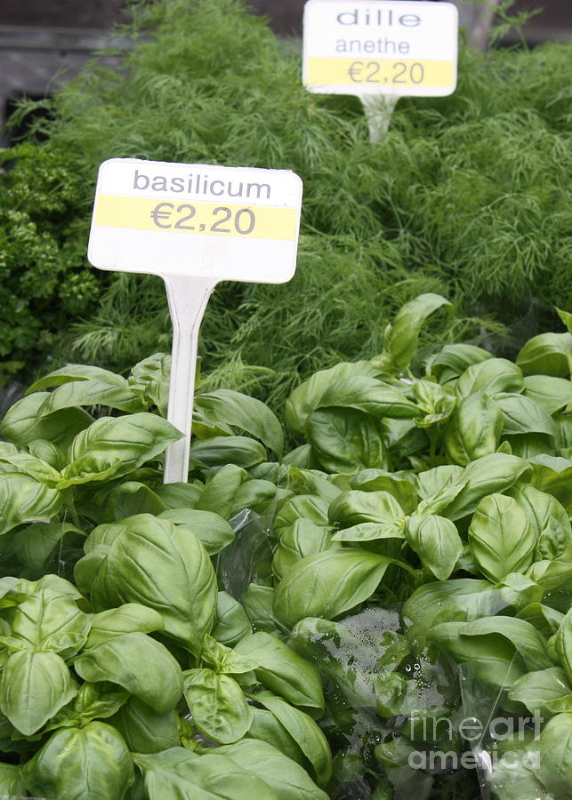 European Markets - Basil And Dill Photograph