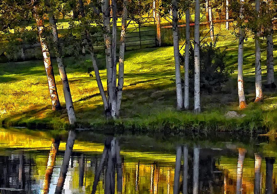 Evening Birches Photograph