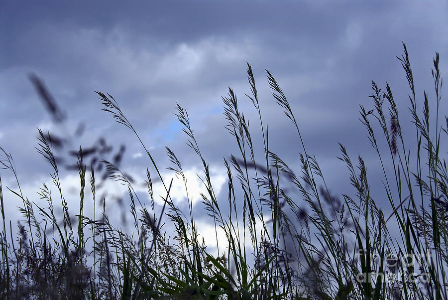 Evening Grass Photograph  - Evening Grass Fine Art Print