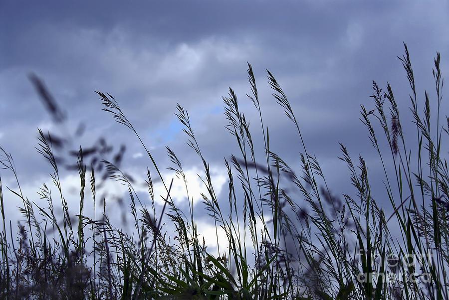 Evening Grass Photograph