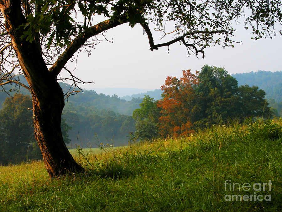 Evening In The Pasture Photograph  - Evening In The Pasture Fine Art Print