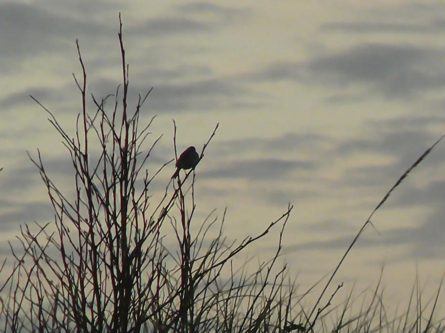 Bird Photograph - Evening Song by Pamela Patch