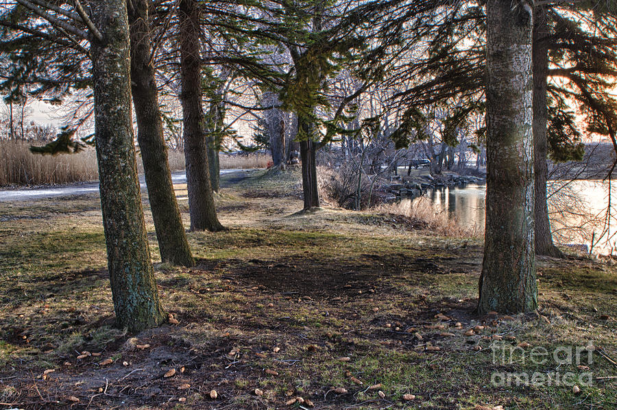 Evergreen Photograph  - Evergreen Fine Art Print
