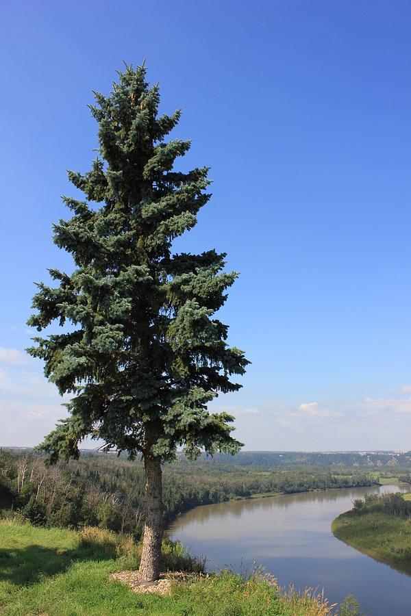 nice view evergreen trees - photo #34