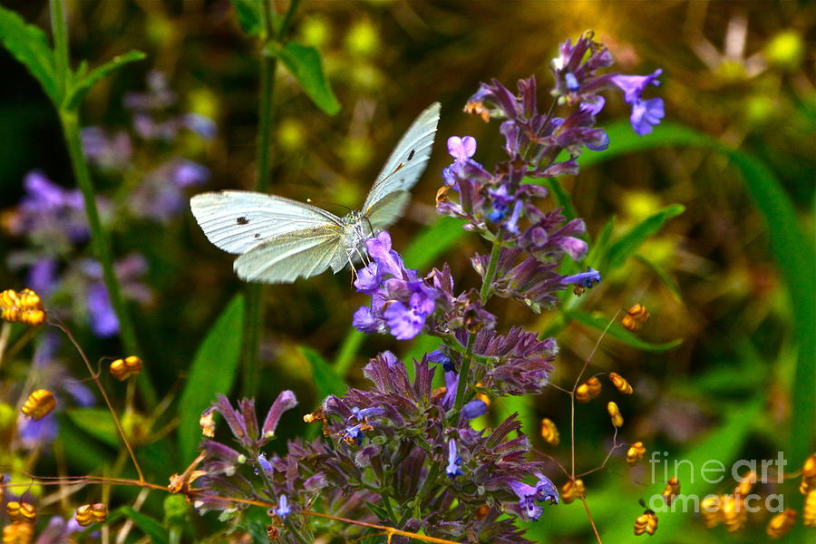 Cabbage Butterflies Photograph - Everyday Miracles by Byron Varvarigos