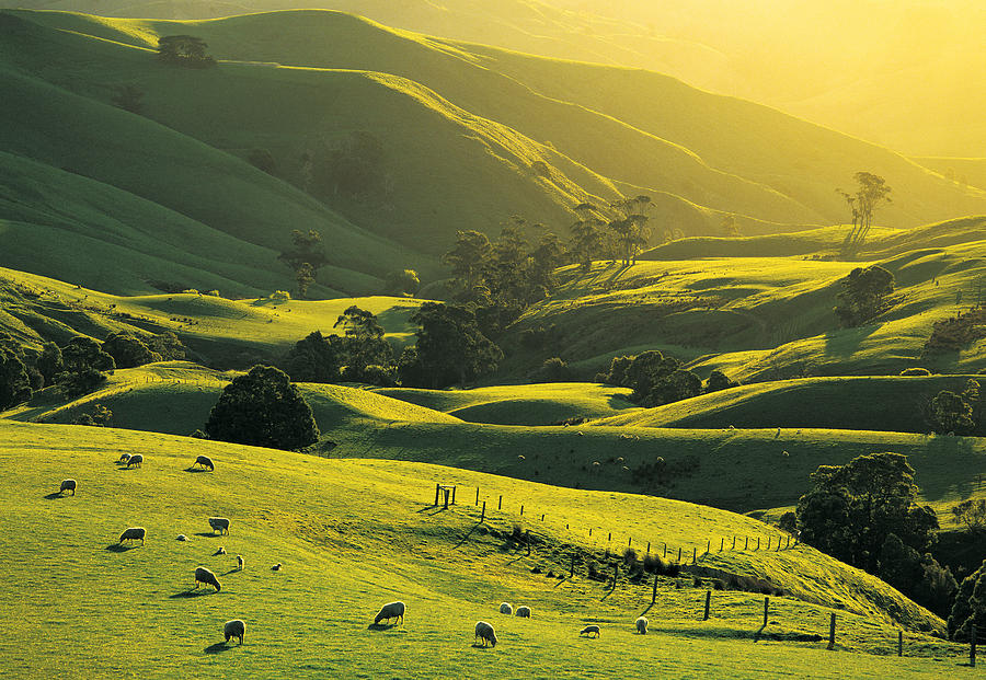Strzelecki Australia  city photo : At Trida, Strzelecki Ranges, South Gippsland, Victoria, Australia ...