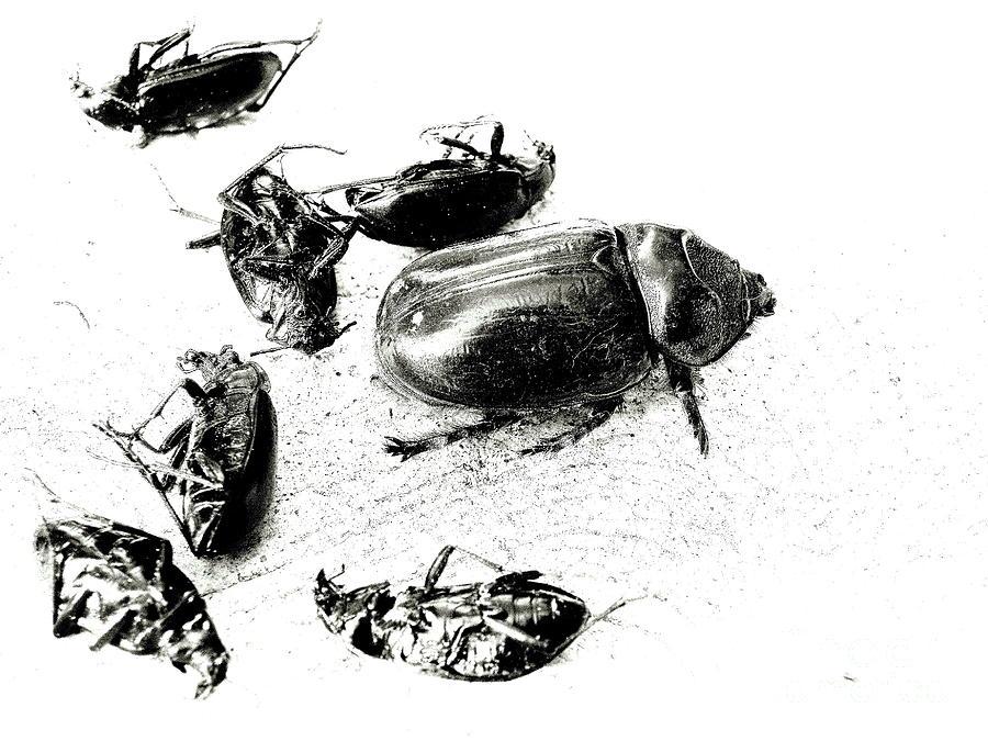 Exterminator Photograph