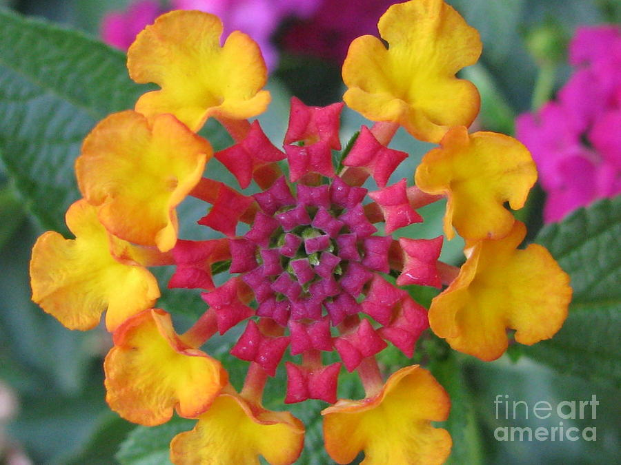 Flower Photograph - Extraordinary Photography by Tina Marie