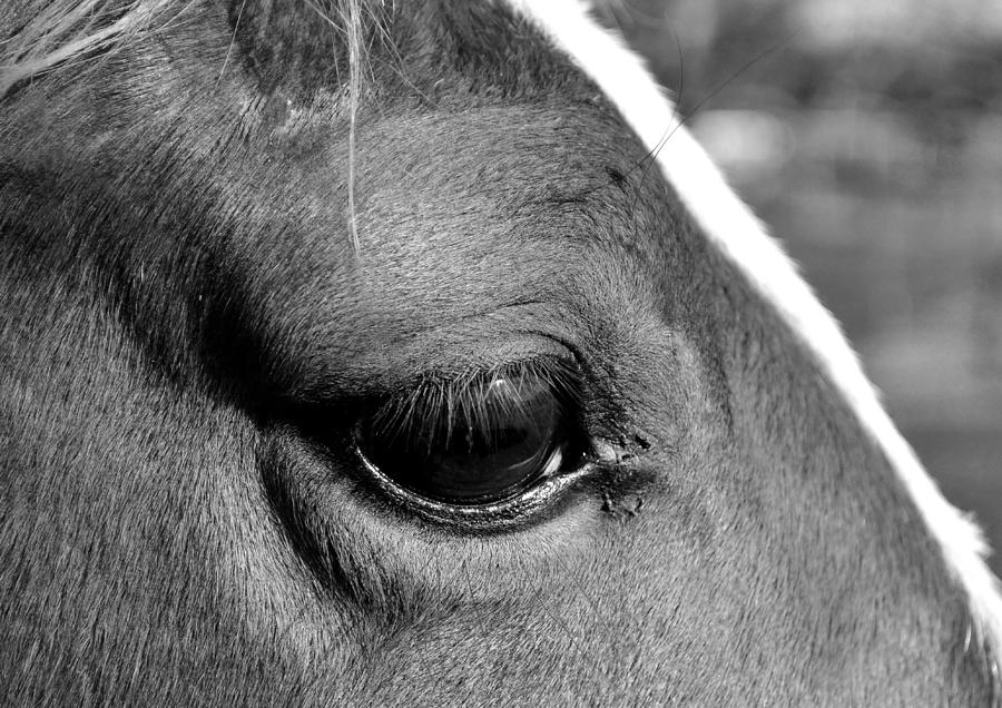 Horse Photograph - Eye Of The Horse Black And White by Sandi OReilly
