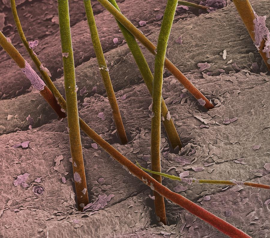 Eyebrow Hair, Sem Photograph