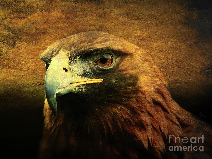 Eyes Of The Golden Hawk Photograph