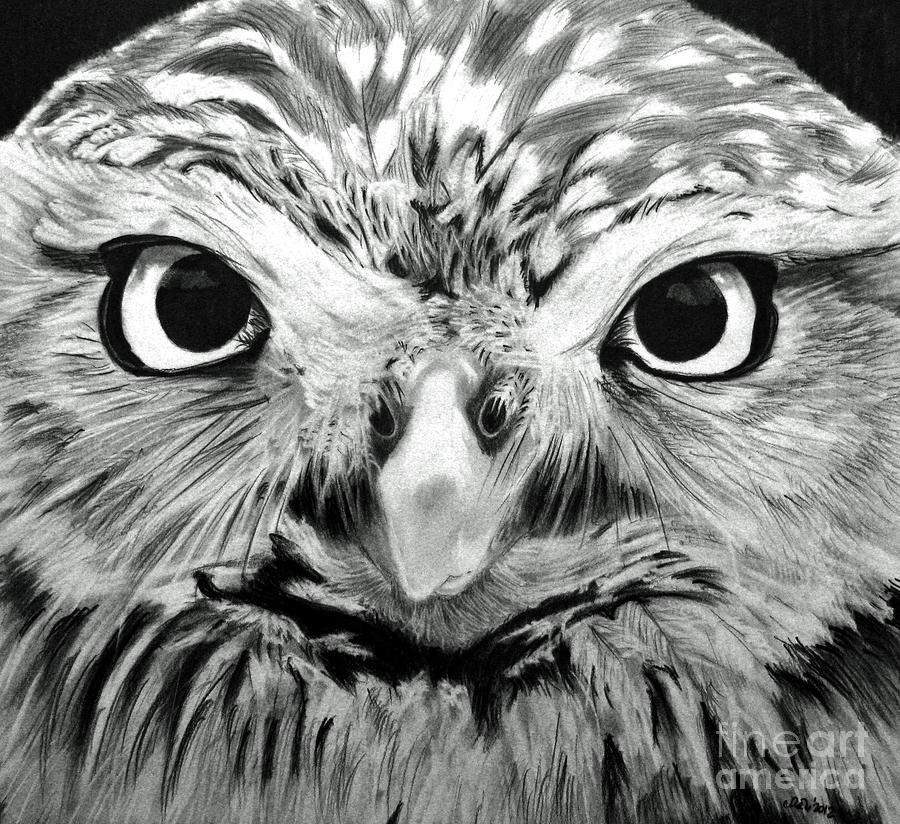 Owl eyes drawing for Owl beak drawing