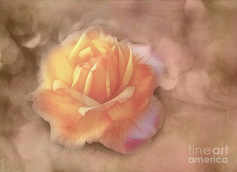 Rose Photograph - Faded Memories by Judi Bagwell