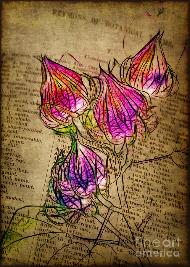 Seedpods Photograph - Faerie Caps by Judi Bagwell