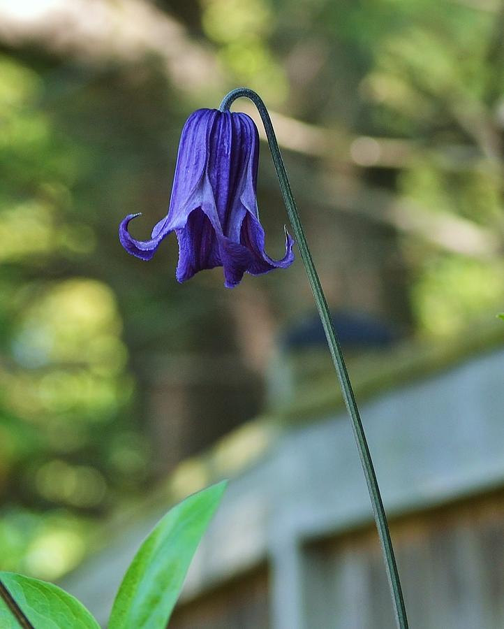Fairy Bell Photograph  - Fairy Bell Fine Art Print