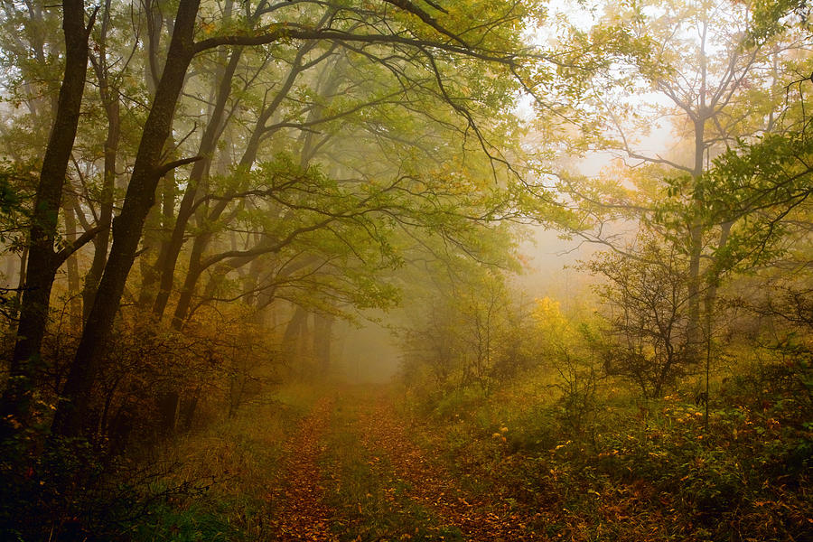 Fairy Wood Photograph
