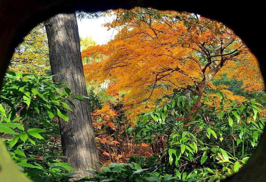 Fall Photograph - Fall Arriving by Vassilis Borovas