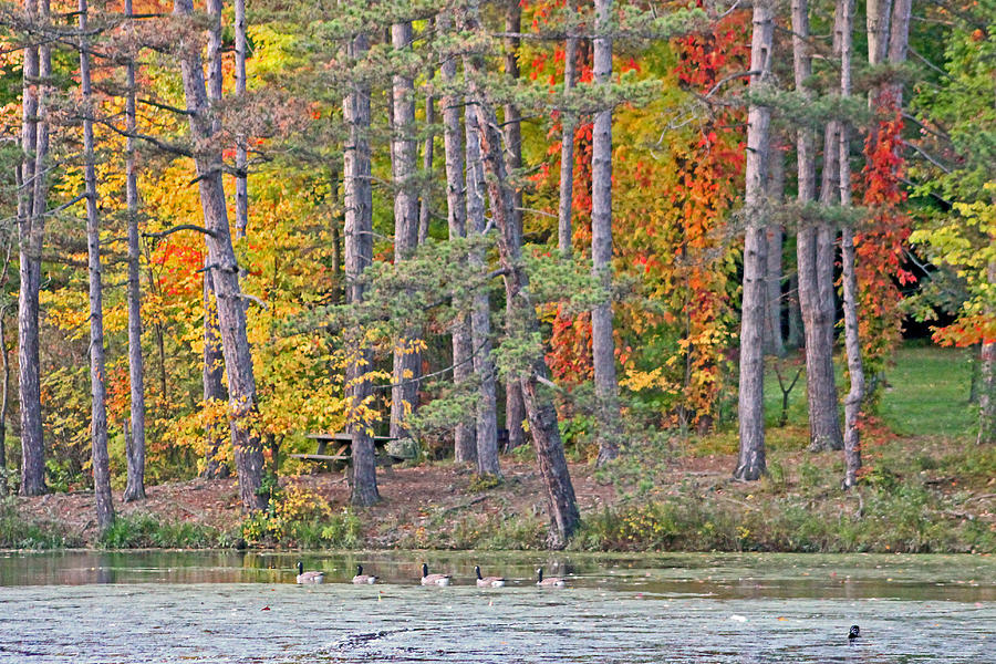 Fall At Strawberry Pond Photograph