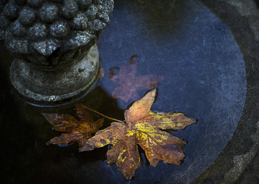 Fall At The Fountain Photograph