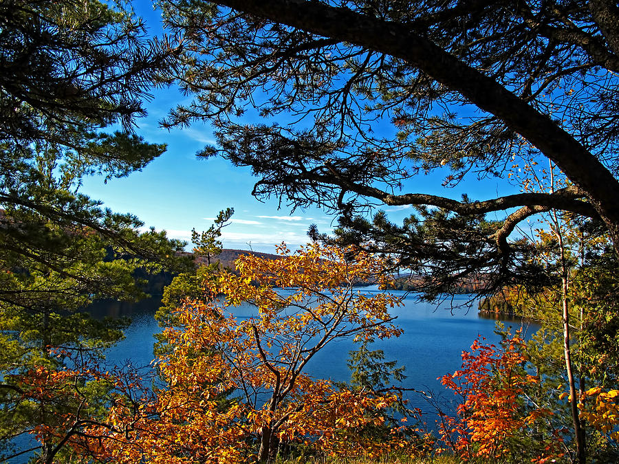 Fall Autumn Colors - Meech Lake Under Blue Skies Framed By Pine Branches And Yellow Leaf Trees Photograph