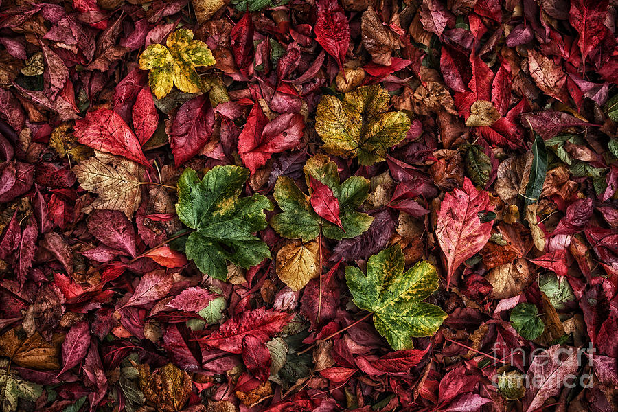Autumn Photograph - Fall Autumn Leaves by John Farnan