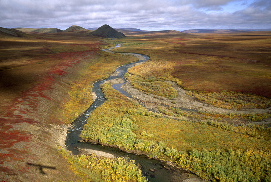 Fall Color On The Central North Slope Photograph
