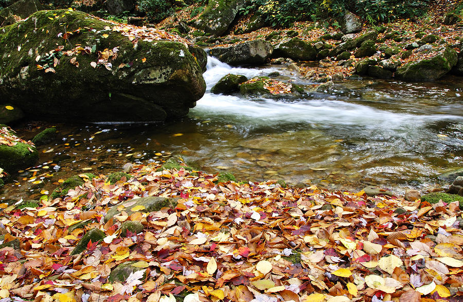 Fall Color Rushing Stream Photograph  - Fall Color Rushing Stream Fine Art Print