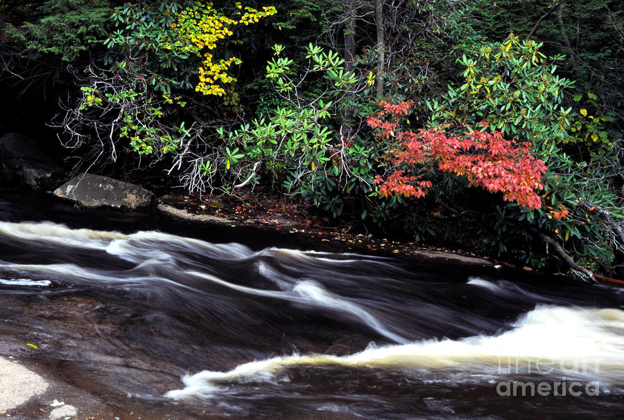Fall Color Swallow Falls State Park Photograph