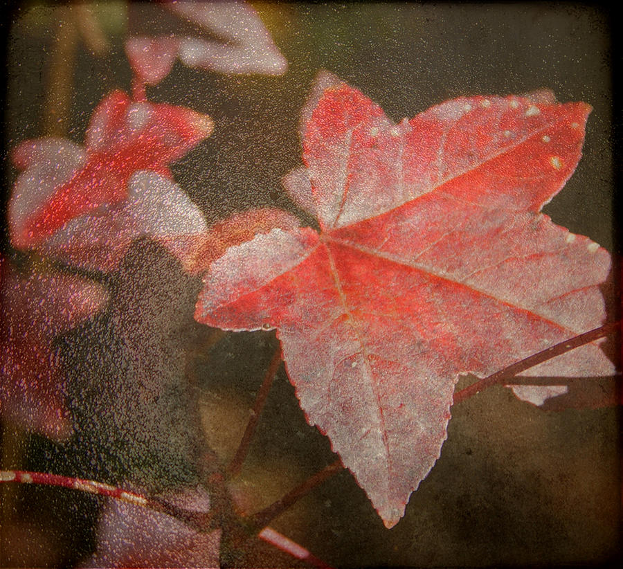 Fall Colors Photograph  - Fall Colors Fine Art Print