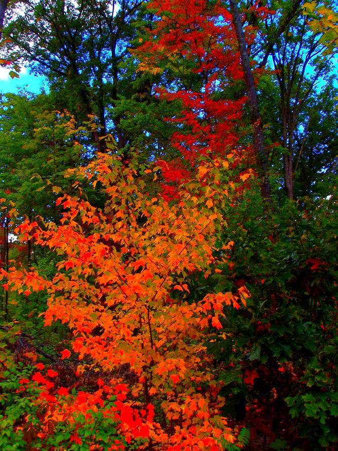 Fall Colors Two Photograph