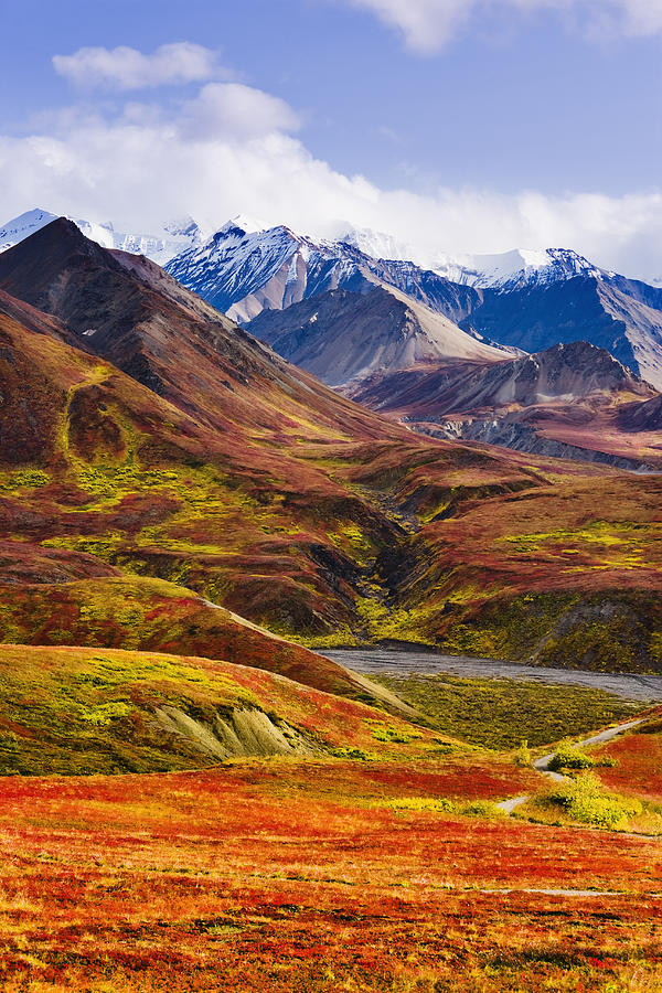 Fall Colours And Alaska Range, Denali Photograph  - Fall Colours And Alaska Range, Denali Fine Art Print