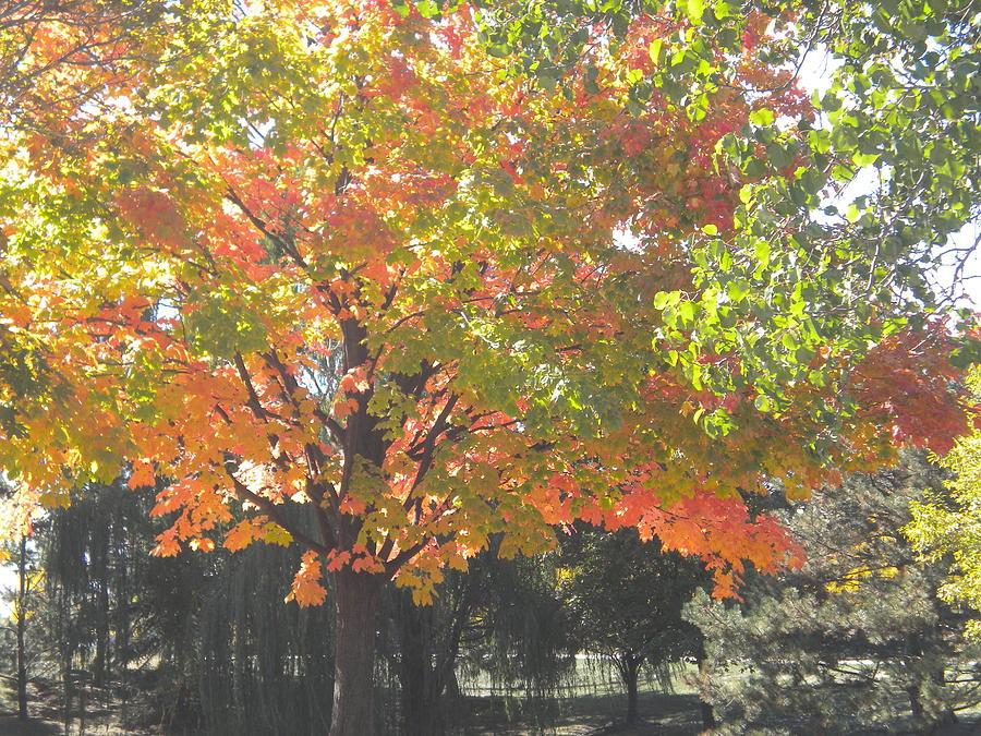 Fall Day Pyrography