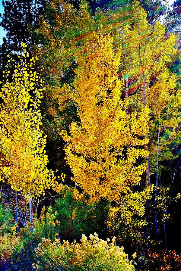 Fall Photograph - Fall Fantasy by Ellen Heaverlo