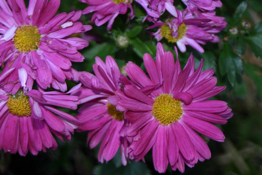 Fall Flowers In Bloom Photograph By Leann Debord