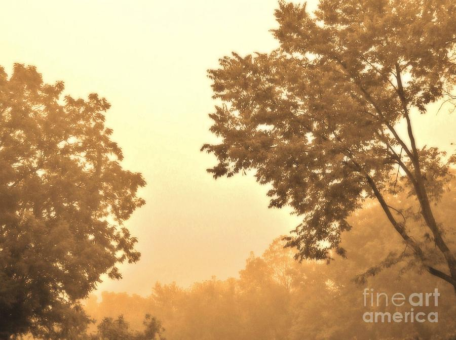 Fall Foggy Morning Photograph