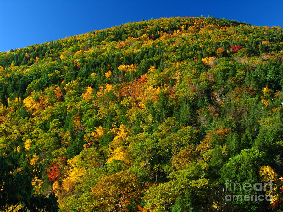 Fall Foliage Photography Photograph