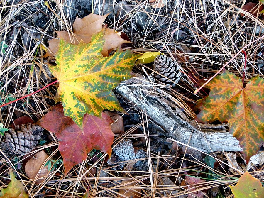 Fall Forest Floor Photograph