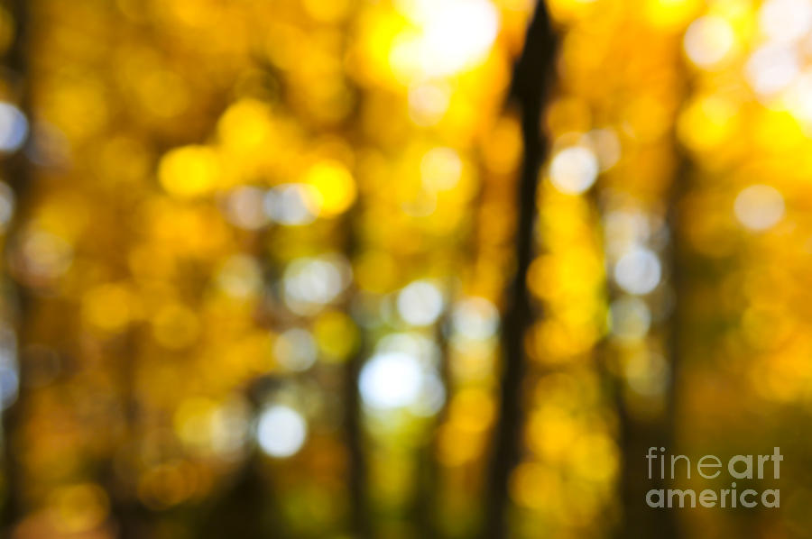 Fall Forest In Sunshine Photograph  - Fall Forest In Sunshine Fine Art Print