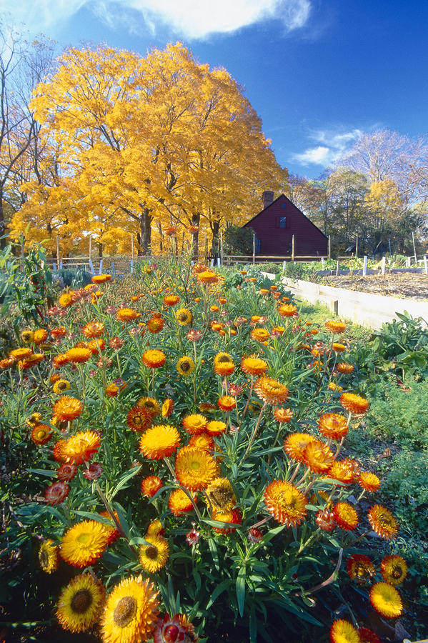 Fall Garden In Jockey Hollow Historic Park New Jersey Photograph  - Fall Garden In Jockey Hollow Historic Park New Jersey Fine Art Print