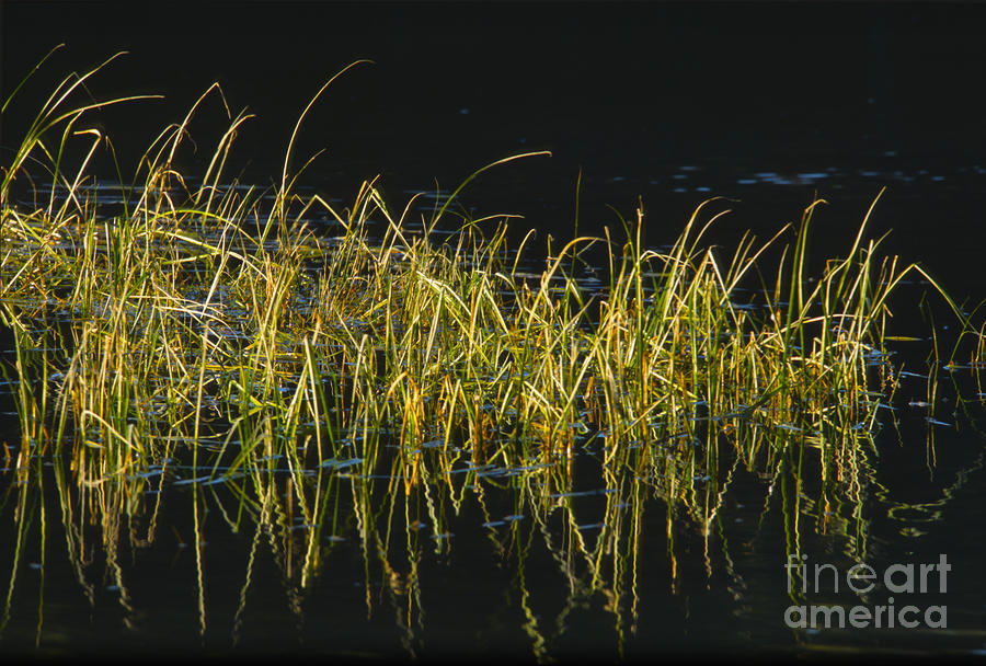 Fall Grasses - Snake River Photograph  - Fall Grasses - Snake River Fine Art Print