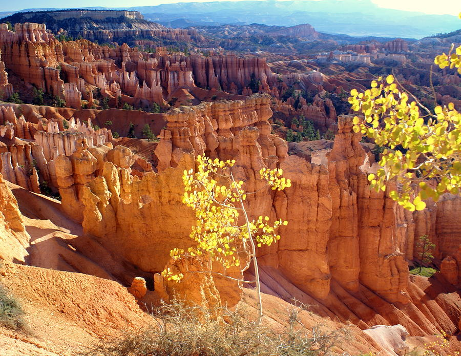 Fall In Bryce Canyon Photograph