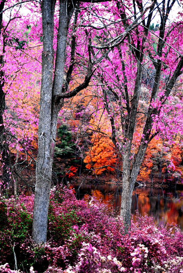 Fall In Pink Photograph  - Fall In Pink Fine Art Print
