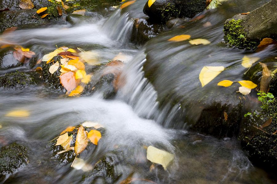 Fall Leaves In Rushing Water Photograph  - Fall Leaves In Rushing Water Fine Art Print